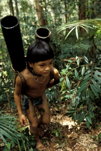 Penan Hunter Gather of Borneo