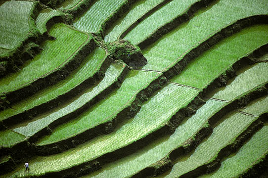 Photos of rice paddies in Sichuan, China