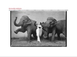 Richard Avedon Website
